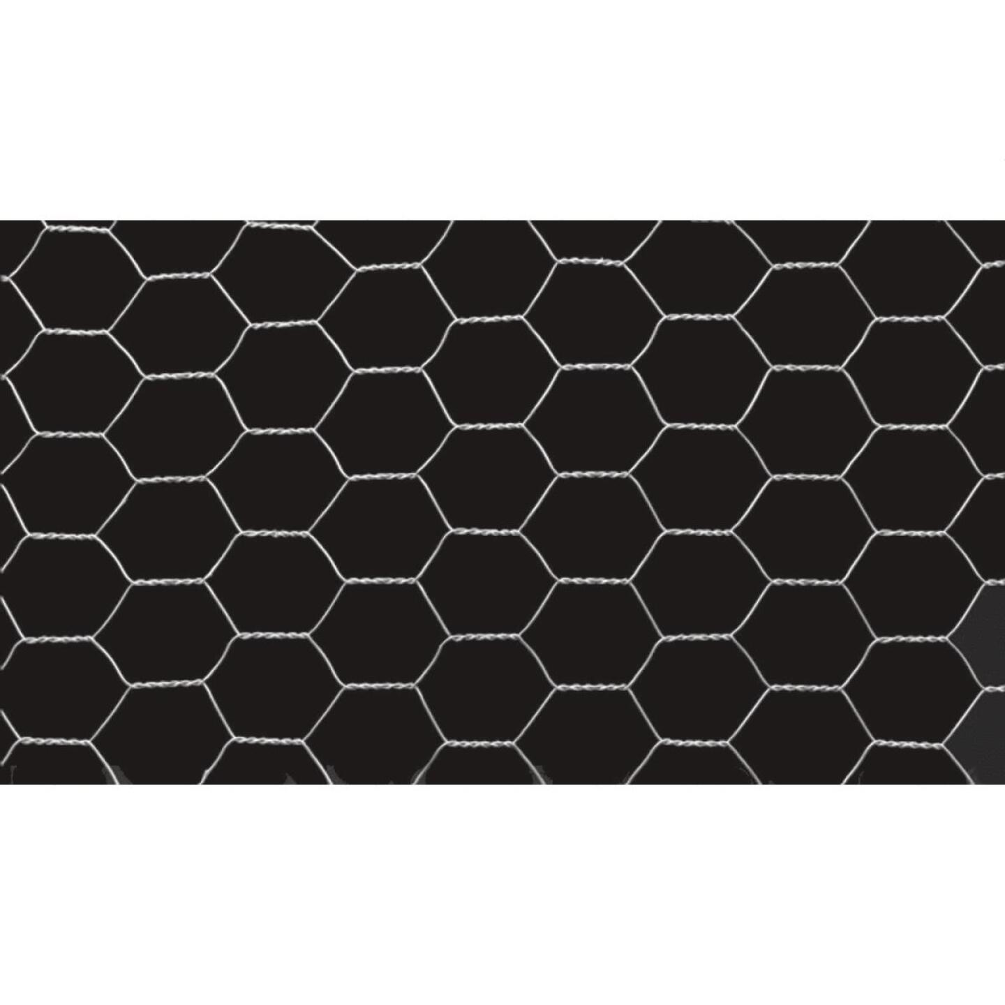 1 In. x 72 In. H. x 50 Ft. L. Hexagonal Wire Poultry Netting Image 3