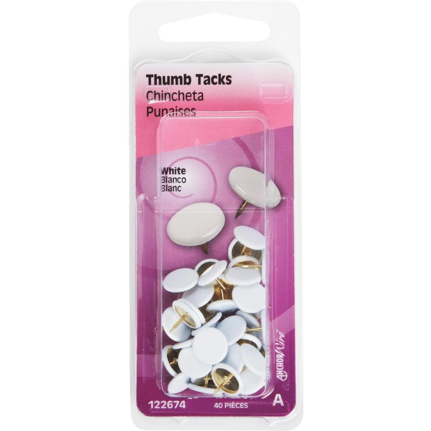 Hillman Anchor Wire White 23/64 In. x 15/64 In. Thumb Tack (40 Ct.) Image 4