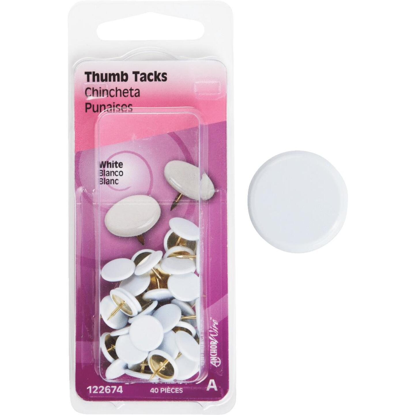 Hillman Anchor Wire White 23/64 In. x 15/64 In. Thumb Tack (40 Ct.) Image 1