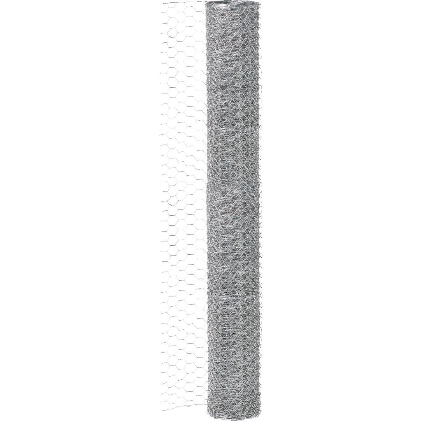 1/2 In. x 24 In. H. x 10 Ft. L. Hexagonal Wire Poultry Netting Image 2